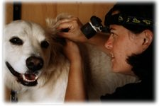 Ear Cleaning for your dog or cat