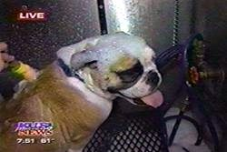 You dirty dog featured live on KUSI News channel 9 for their Mobile dog and cat grooming services