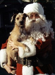 santa with a rescued baja dog